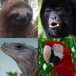 What's your Costa Rica spirit animal?