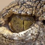 Interview with CrocBITE – The Worldwide Crocodilian Attack Database